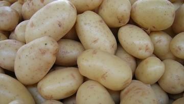 OGM: BASF abbandona la produzione in Europa