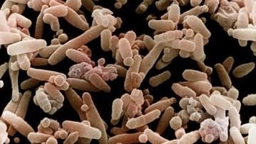 La prima mappa del microbioma umano