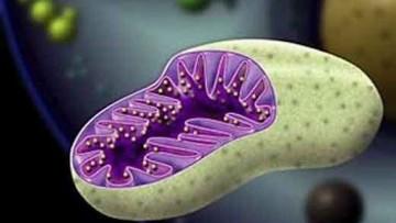 Il Dna mitocondriale non e' piu' un segreto