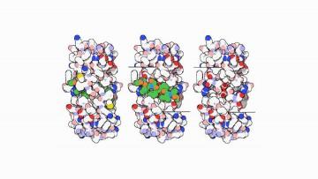 Il meccanismo che rende visibili le cellule infettate dall'Hiv