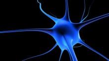 Sclerosi multipla: scoperto un anticorpo per la stabilizzazione della malattia
