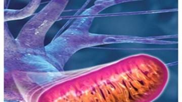 Sindrome di Down: dal te' verde una molecola contro lo stress ossidativo