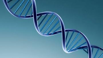 Dal Cnr una scoperta sull'espressione non patologica del gene Ron