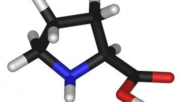 L -Prolina e' l'aminoacido che determina la motilita' delle staminali pluripotenti