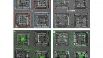 Batteri come 'facchini' per lavorare in micro-laboratori