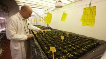 Le piante 'decidono' di crescere?