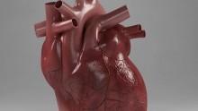 Una colla per 'riparare' cuore e vasi sanguigni