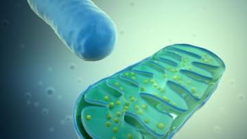 Malattie genetiche mitocondriali, nuove speranze da uno studio Cnr