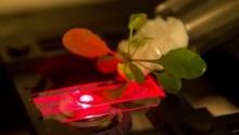 Le piante del futuro? Per il Mit saranno bioniche