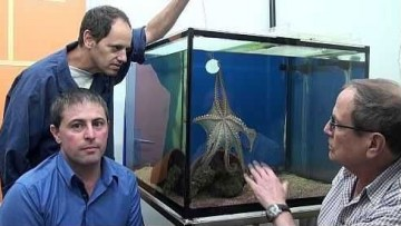Scoperto il 'segreto chimico' dei tentacoli del polpo