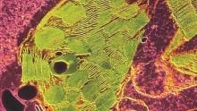 Dall'elettrolisi delle piante nasce una 'danza' di elettroni e protoni