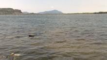 Nei laghi italiani sempre troppi i batteri inquinanti