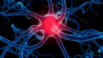 Levodopa e Parkinson: cosa accade nel cervello dei pazienti?