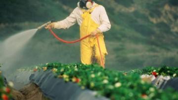 Fitofarmaci negli alimenti, per l'Efsa 97% dei cibi nei limiti
