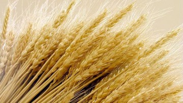 Glutine: l'effetto piroelettrico per scovare le tracce minime