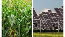 La cella solare che 'imita' la fotosintesi naturale