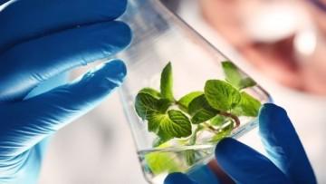 Per la chimica verde nasce il cluster tecnologico nazionale