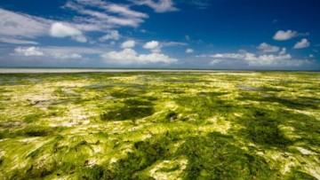 Dalle alghe il carburante del futuro
