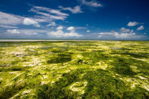 wpid-3022_algae.jpg