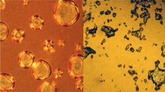 wpid-3046_liquidprotein.jpg