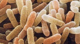 È il monossido d'azoto che rende resistenti i batteri agli antibiotici