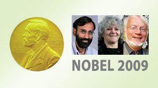 Il Nobel per la chimica  per gli scopritori della struttura dei ribosomi