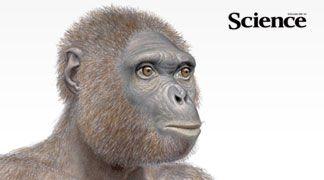 La classifica delle più importanti scoperte scientifiche del 2009