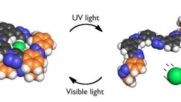 """La molecola che """"acchiappa"""" gli inquinanti clorurati"""