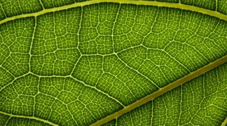 Le celle solari imitano la natura: ecco le foglie artificiali