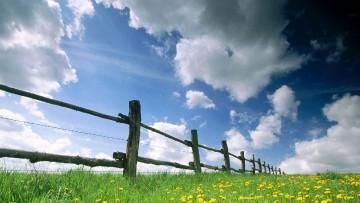 Le piante per bonificare dall'inquinamento da metalli pesanti