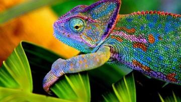 I misteri del mondo animale svelati dalla chimica