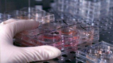 Polimeri e raggi Euv per creare cellule nuove