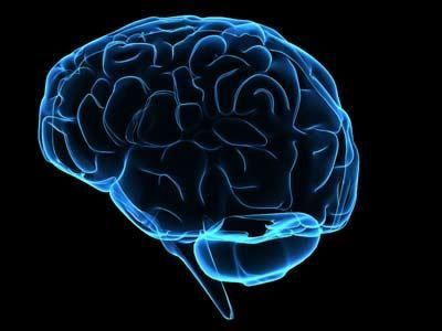 wpid-8091_cervello.jpg