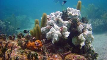 Dalle profondità del mare nuovi materiali nano-bio