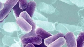 Batteri: scoperto il meccanismo di resistenza ai farmaci
