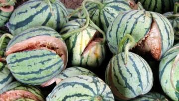 In Cina esplodono le angurie: troppi agenti chimici