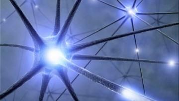 Da cellule epiteliali a cellule cerebrali
