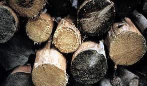 Dalle termiti un enzima per produrre biocarburante