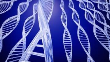 Scoperto il meccanismo di riaccensione dei geni