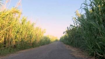 Bioetanolo: joint venture Italia-Usa da 250 milioni