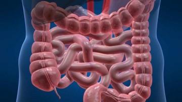 L'intestino umano si è adattato ad antibiotici ed inquinanti