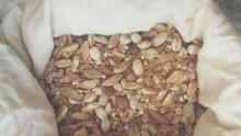 Nel piccolo farro c'è un glutine più digeribile