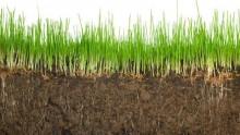 Resafe, fertilizzante 'green' che tutela la ritenzione idrica del terreno