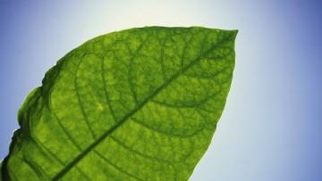 Dal tabacco una fabbrica di molecole contro le emergenze sanitarie