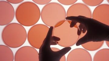 Un unico farmaco contro tutte le infezioni virali: la scommessa Unisi-Cnr